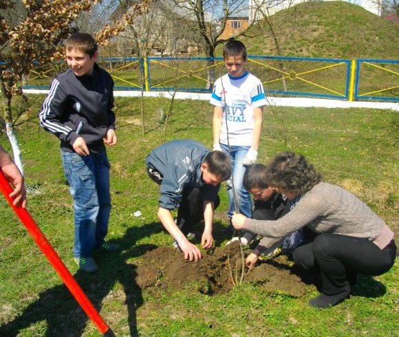 Школярі та їх наставники висаджують «дерева миру»
